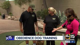 Obedience training helps dogs with social skills - Video