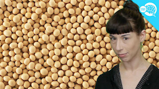 BrainStuff: Does Soy Cause Cancer?