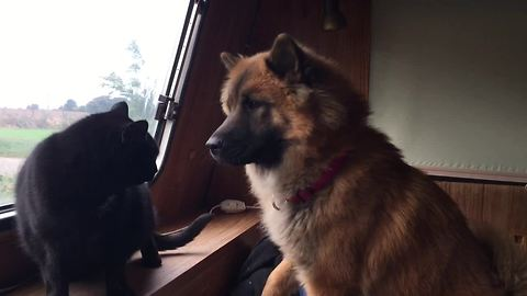 Mean Cats Will Not Befriend Curious Doggy For The World