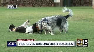 Dog flu now in Arizona: what you need to know - Video