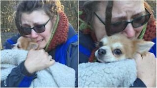 Emotional moment family is reunited with their missing dog