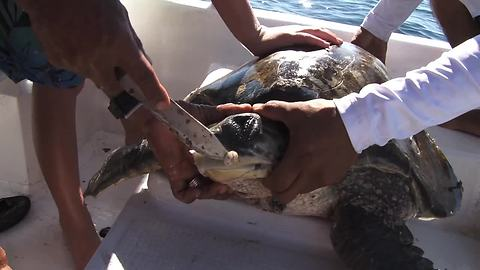 Kid Rescues And Saves Injured Sea Turtle