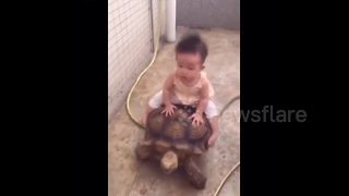 Six-month baby rides huge tortoise