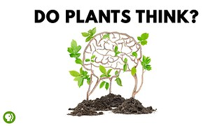 S4 Ep2: Do Plants Think? - Video