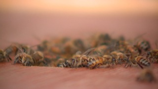 Beehives in Akron cause controversy after bees allegedly sting dogs - Video