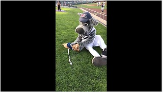Dog bonds with team mascot during baseball game - Video
