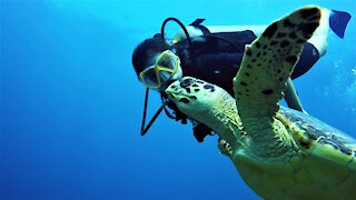Endangered sea turtle and divers share a dream encounter