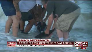 2Works For You reporter helps save dolphin - Video