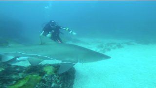 A Diver Saved This Shark From A Slow And Painful Death