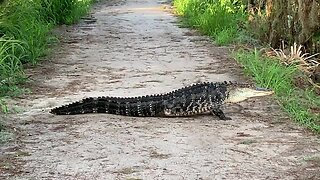 Three-legged alligator spotted at Florida nature reserve