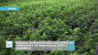 Nevada Governor Declares State of Emergency As Marijuana Supply Dwindles - Video