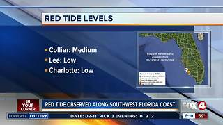 Red tide bloom persists along Southwest Florida coast - Video