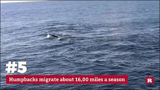5 facts about humpback whales | Rare Animals - Video