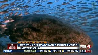 You could soon hunt goliath groupers in Florida - Video