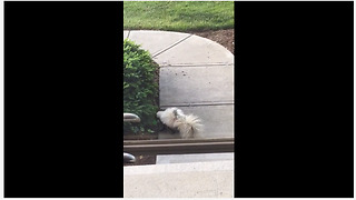 Skunk plays with toy egg like a kitty cat