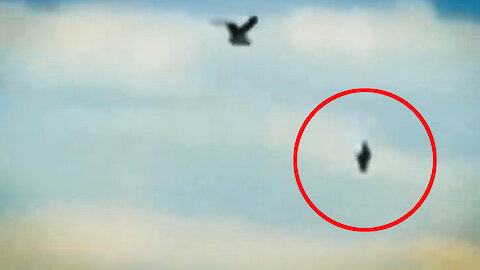 Black triangle UFO gets attention from birds in Utica, NY