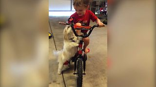 Sweet Pup Loves Kid's Bicycle Horn - Video