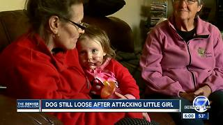 Dog still loose after attacking little girl - Video