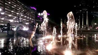 Siberian Husky plays in public water fountain in Boston