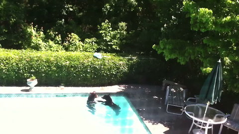 Who Knew Bears Love the Pool?