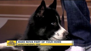 Rescues in Action: Nova