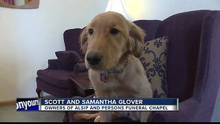 Comfort dog provides support at Alsip & Persons - Video
