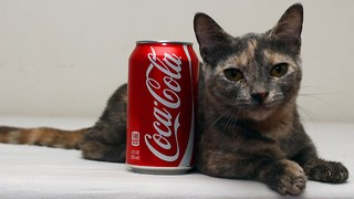 Cute Cat Could Be The World's Shortest Feline - Video