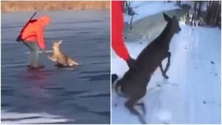 Hunters rescue deer trapped on ice