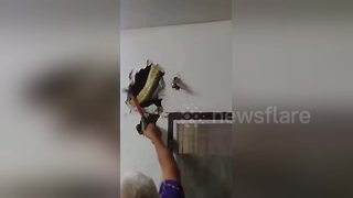 Massive python caught hiding inside living room wall - Video