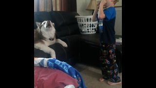 Chubby Husky Sings With Harmonica