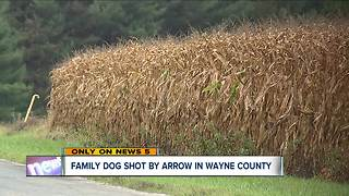 Dog shot with arrow in Wayne County - Video