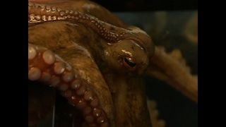 Octopus Learns Tricks - Video