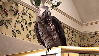 Generous parrot offers imaginary squirrel a nut