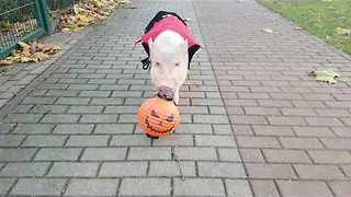 Moritz the Pig Goes Trick-or-Treating - Video
