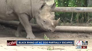 Kansas City Zoo rhino partially escapes
