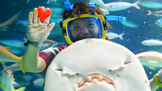 Japanese Aquarium Valentine's Day Celebrations 2015 - Video
