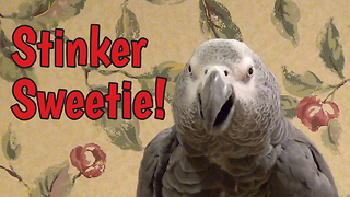 Einstein the parrot is a stinker!