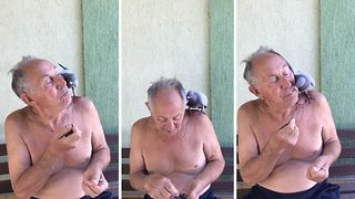 Pigeon eats from pensioner's mouth as unlikely duo show off their remarkable bond  - Video