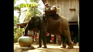 'Magic' Elephant? - Video
