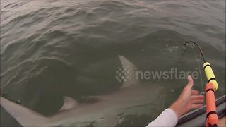 Florida kayaker battles 6-foot hammerhead shark caught on hook - Video