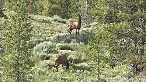Idaho Fish & Game proposes new out of state hunting management plan