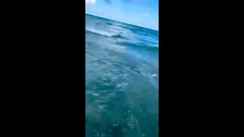 Officer pulls boy from close encounter with a shark