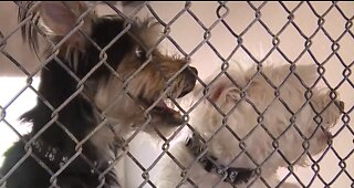 EXCLUSIVE: First look inside troubled Nevada SPCA kennels