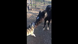 This crazy husky and his horse friend can't stop kissing each other