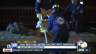 Dog rescued after falling into sinkhole