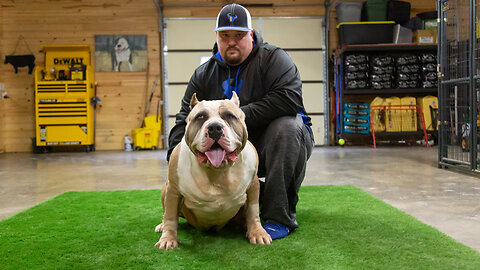 Huge 180lb Bully Challenges Dad's Record Weight | BIG DOGZ