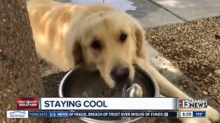 Charlie staying cool
