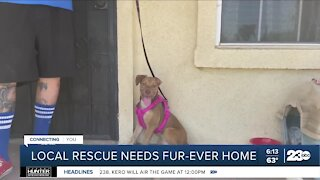 Bakersfield pup suffering from animal abuse needs fur-ever home