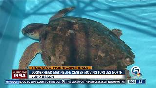 Palm Beach Zoo and Loggerhead Marinelife Center prep for Hurricane Irma - Video