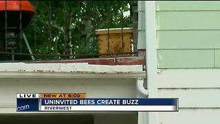 Uninvited bees create buzz - Video